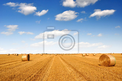 big round bales of straw in the field