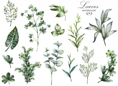Wall mural Big Set watercolor elements - herbs, leaf. collection garden and wild herb, leaves, branches, illustration isolated on white background, eucalyptus, exotic, tropical leaf. Green