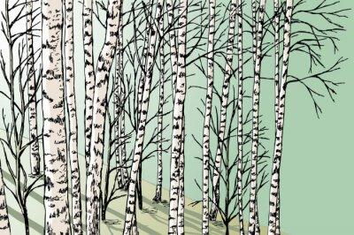 Wall mural birch grove