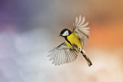 Wall mural bird bird fly stretch your wings in the sky at sunset
