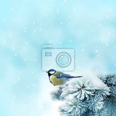 Wall mural bird (great titmouse ) in winter time