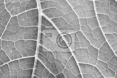 black and white leaf close up in the detail