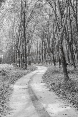 Wall mural black and white of the way to the forest