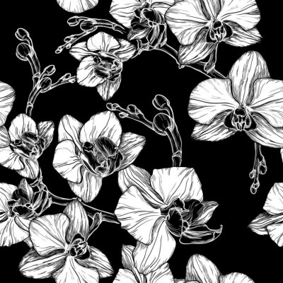 Wall mural black and white seamless pattern with hand drawing orchid flower