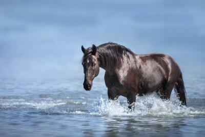 Black beautiful stallion run gallop in water with splash
