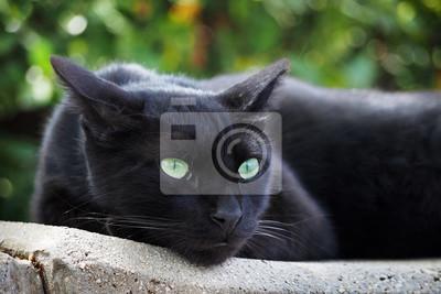 Black Cat it's a little panther
