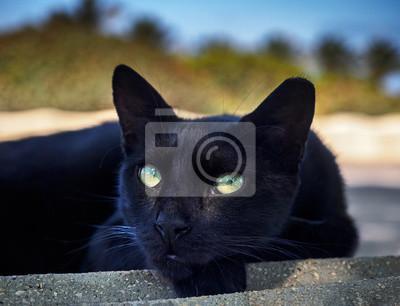 Black cat look
