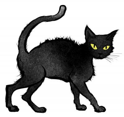 Wall mural Black Cat walking and looking at the camera