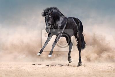 Black horse run and fun jump in desert dust