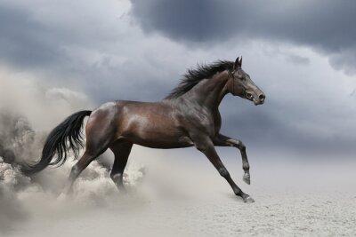 Wall mural Black horse run gallop in dust desert