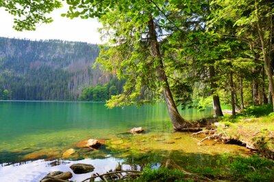 Black lake (Cerne jezero) in the National park Sumava, Czech Republic.