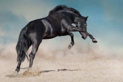 Black stallion run on desert dust against blue background