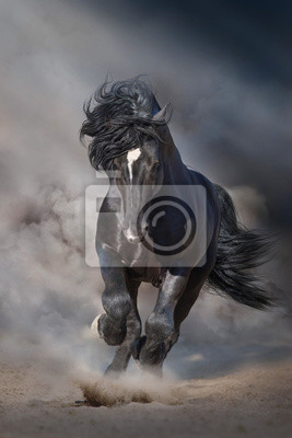 Wall mural Black stallion run on desert dust against dramatic background