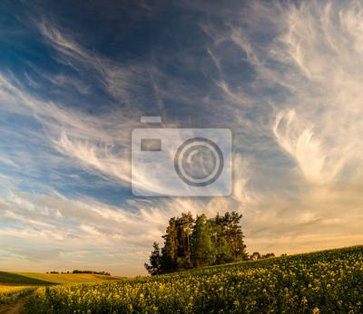 Błękine niebo nad polami