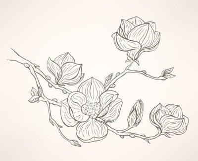 Wall mural blooming magnolia