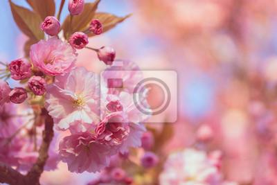 Wall mural blossoming tree