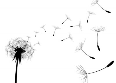 Wall mural Blow Dandelion on white background