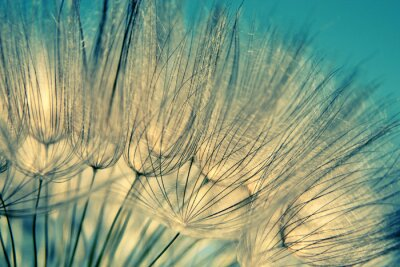 Wall mural Blue abstract dandelion flower background