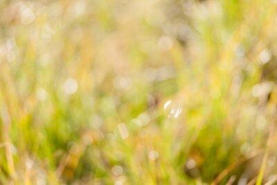Blurry wet grass in sunshine background photo