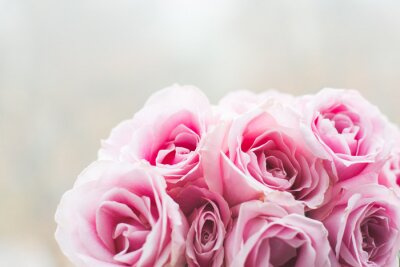 Wall mural Bright pink roses background