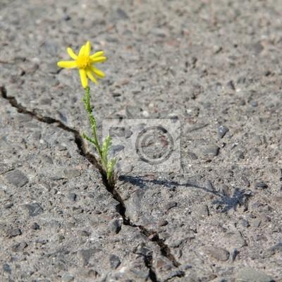 broken road surface
