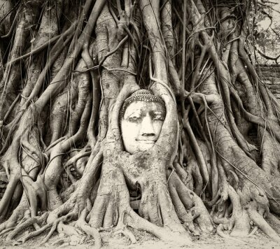 Wall mural Buddha head in tree roots in Wat Mahathat, Ayutthaya, Thailand