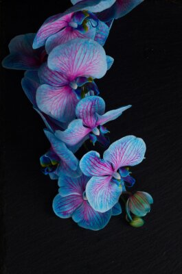 Wall mural Bunch of violet orchids