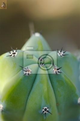 cactus bud 3