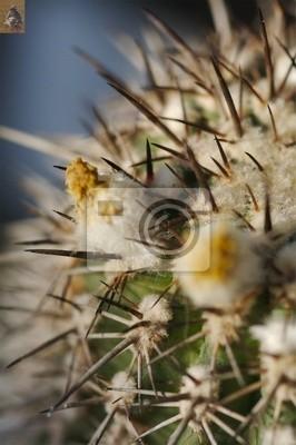 cactus bud 5