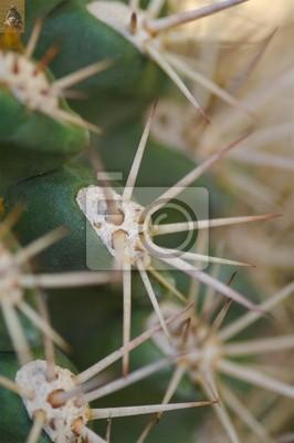 cactus bud 6