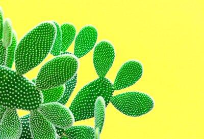 Wall mural Cactus Fashion Set. Sweet Summer Style. Art gallery Design. Minimal fashion Stillife. Vanilla Trendy Bright Colors. Green Neon Cactus Mood, Surrealism. Creative Unusual Fun. Yellow background