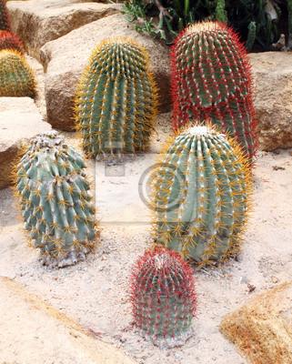 Cactus in Nong Nooch Garden, Pattaya, Thailan