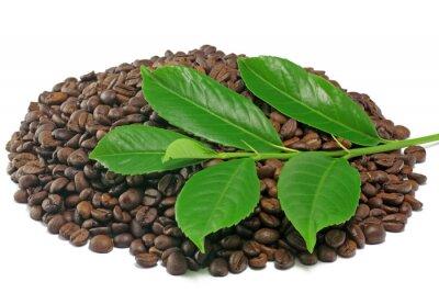 cafe mit zweig