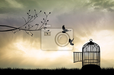 Wall mural Cage for bird at sunset