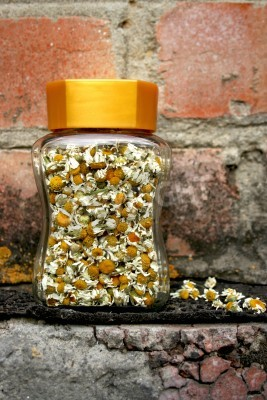 Wall mural Camomile flowers in glass jar isolated on brick wall background