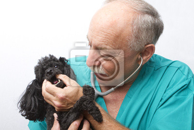 Wall mural Canine Doctor and Patient