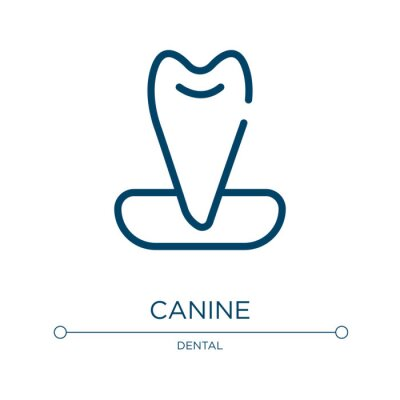 Wall mural Canine icon. Linear vector illustration from dental care collection. Outline canine icon vector. Thin line symbol for use on web and mobile apps, logo, print media.