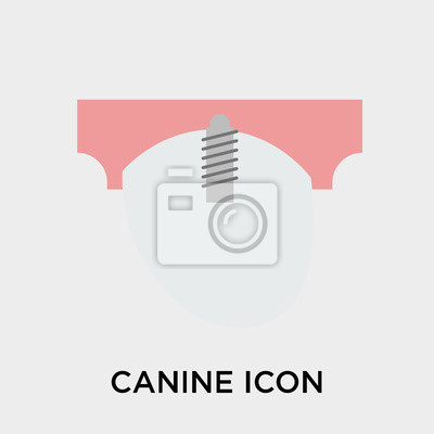 Wall mural Canine icon vector sign and symbol isolated on white background, Canine logo concept