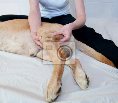 Wall mural Canine Massage