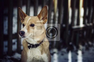 Wall mural Caninity