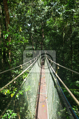 Wall mural Canopy sky walk in rain forest