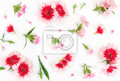 Carnation flowers on white background. Flat lay.