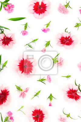 Carnation flowers on white background. Flat lay composition.