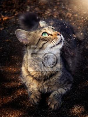 Cat looking at the magic light
