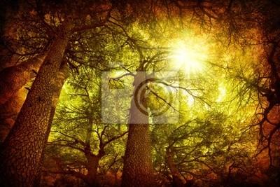 Wall mural Cedar tree forest
