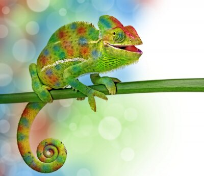 Wall mural chameleon and colors