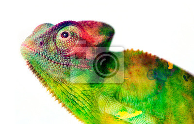 Wall mural chameleon - and water colors