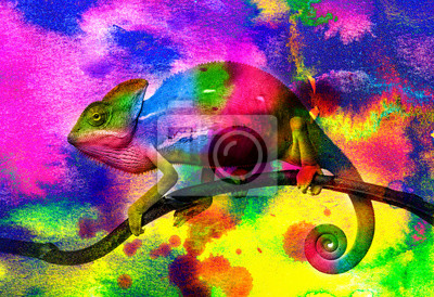 Wall mural  chameleon - and wild colors