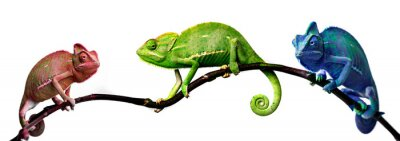 Wall mural chameleon - in tree cool colors