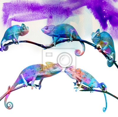 Wall mural chameleons -  on a branch and colors